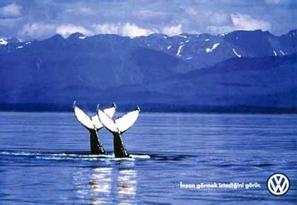 1998 Volkswagen - Whales